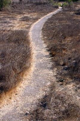 20100428002117-75-camino-tortuoso.jpg